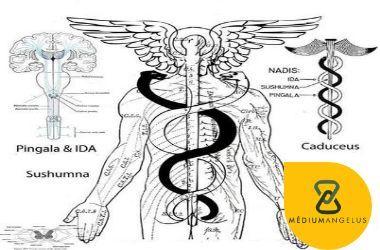 caduceo medicina
